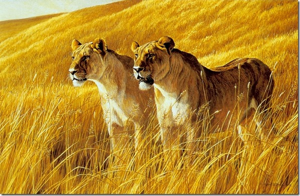 African Amber - Lioness Pair